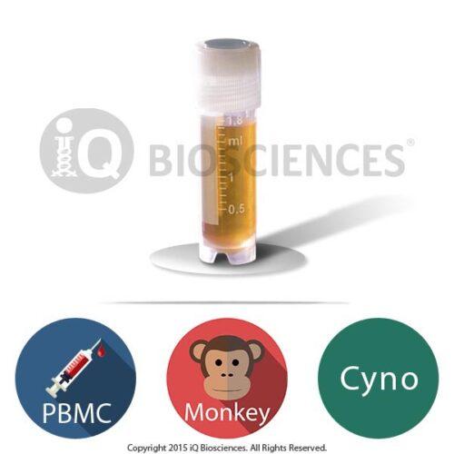 Cynomolgus Monkey PBMCs