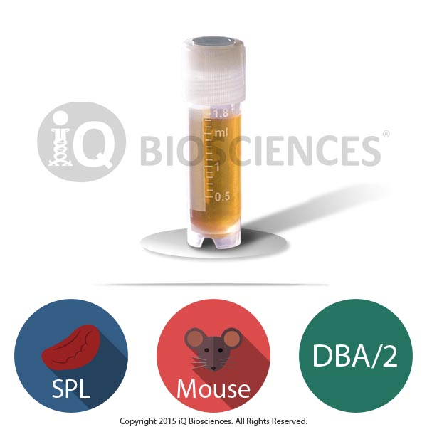 DBA/2 Mouse Splenocytes