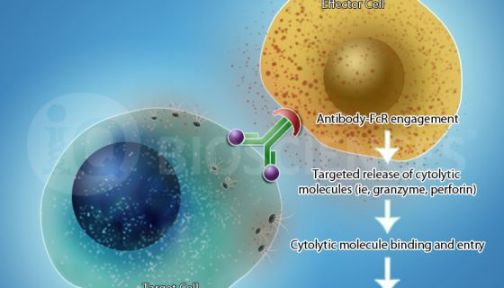 service-image-antibody-dependent-cell-mediated-cytotoxicity-adcc-res-8
