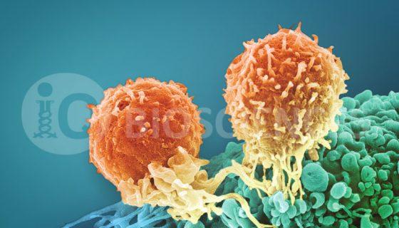 service-image-immuno-oncology