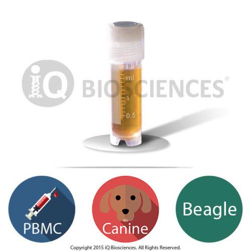 Beagle Canine PBMCs