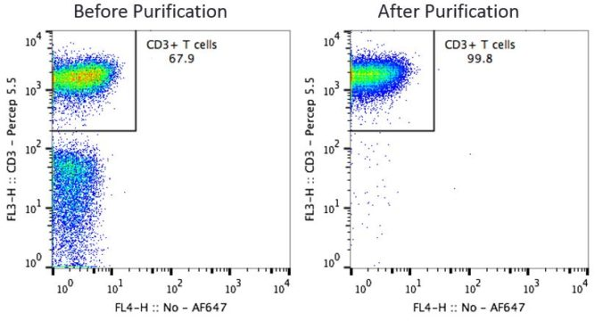 CD3 Pan T Cells Before and After Purification