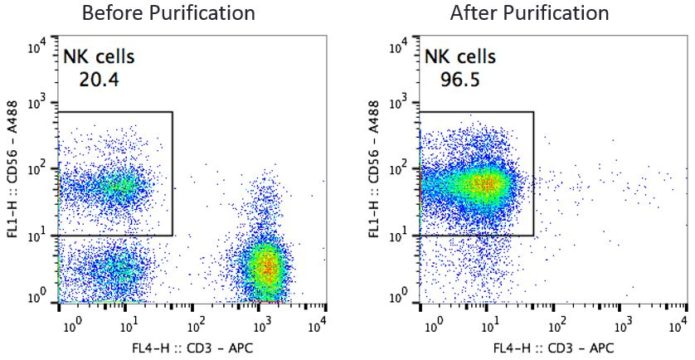 CD56 NK Cells Before and After Purification