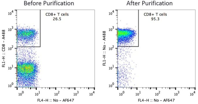 CD8 T Cells Before and After Purification