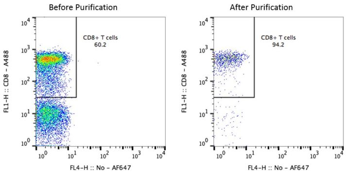 Cyno CD8 T Cells Before and After Purification