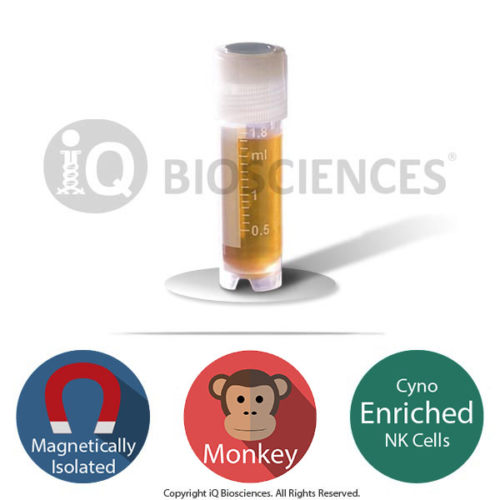 cyno monkey purified nk cells