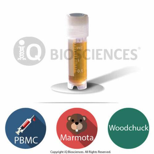 Marmota Woodchuck PBMCs