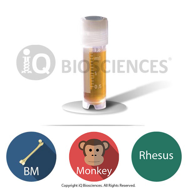 rhesus monkey bone marrow