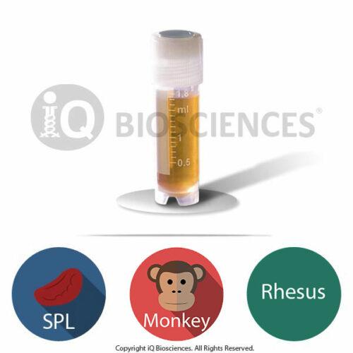 rhesus monkey splenocytes
