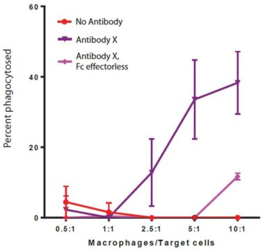 Figure 1: Percent macrophages phagocytosing target cells at different macrophage:target ratios