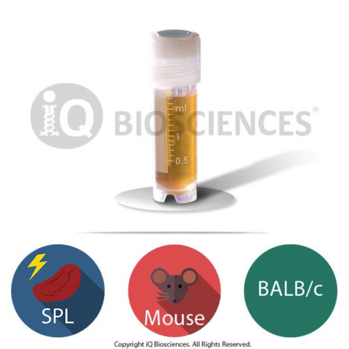 BALB/c mouse irradiated splenocytes