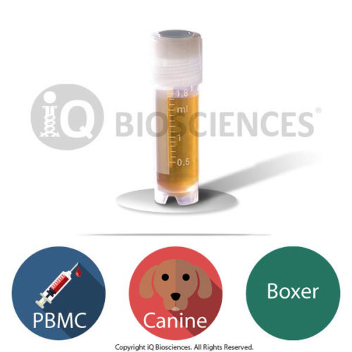 Boxer Canine PBMCs