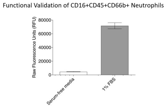Functional validation of CD16+CD45+CD66b+ Neutrophils