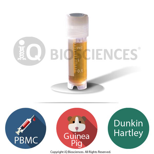 Dunkin Hartley Guinea Pig PBMCs