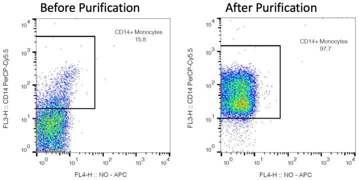 rhesus cd14 cells pre and post purification