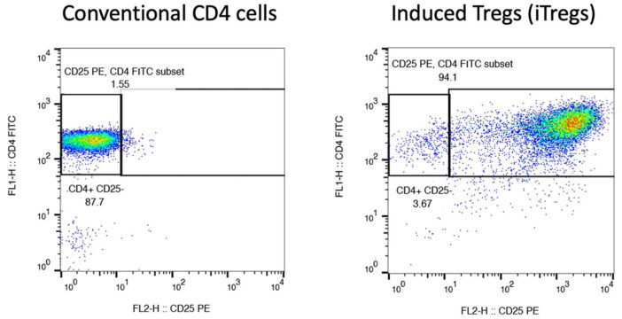 Conventional CD4 Cells Versus Induced T Regulatory Cells iTregs